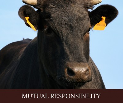 Diving Into The Earmarks_ Mutual Responsibility