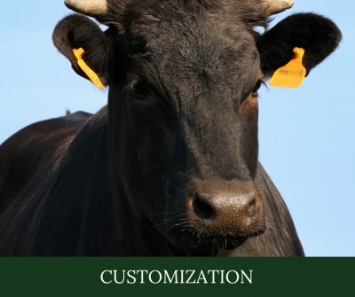 Diving Into the Earmarks - Customization