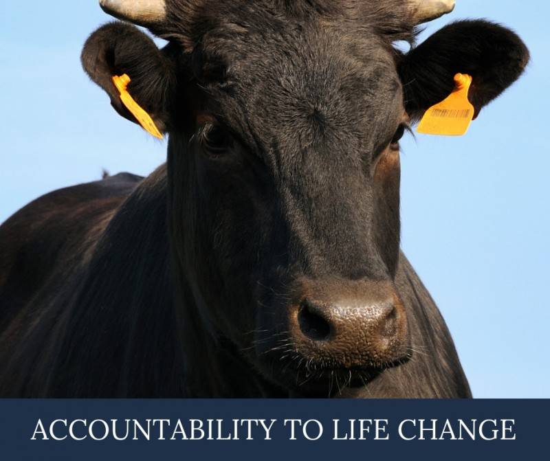 Diving Into The Earmarks_ Accountability to Life Change